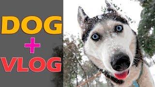 Собаки угнали санки - гонки на собачьих упряжках, чемпионат Украины