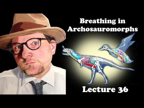 Lecture 36 Breathing in Archosauromorphs