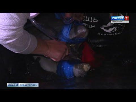 Севастопольцы помогли спасти дельфина в бухте Казачья