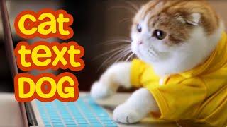 Cat Texting Dog | Cute Cat Scottish Fold |  Waffles the Cat