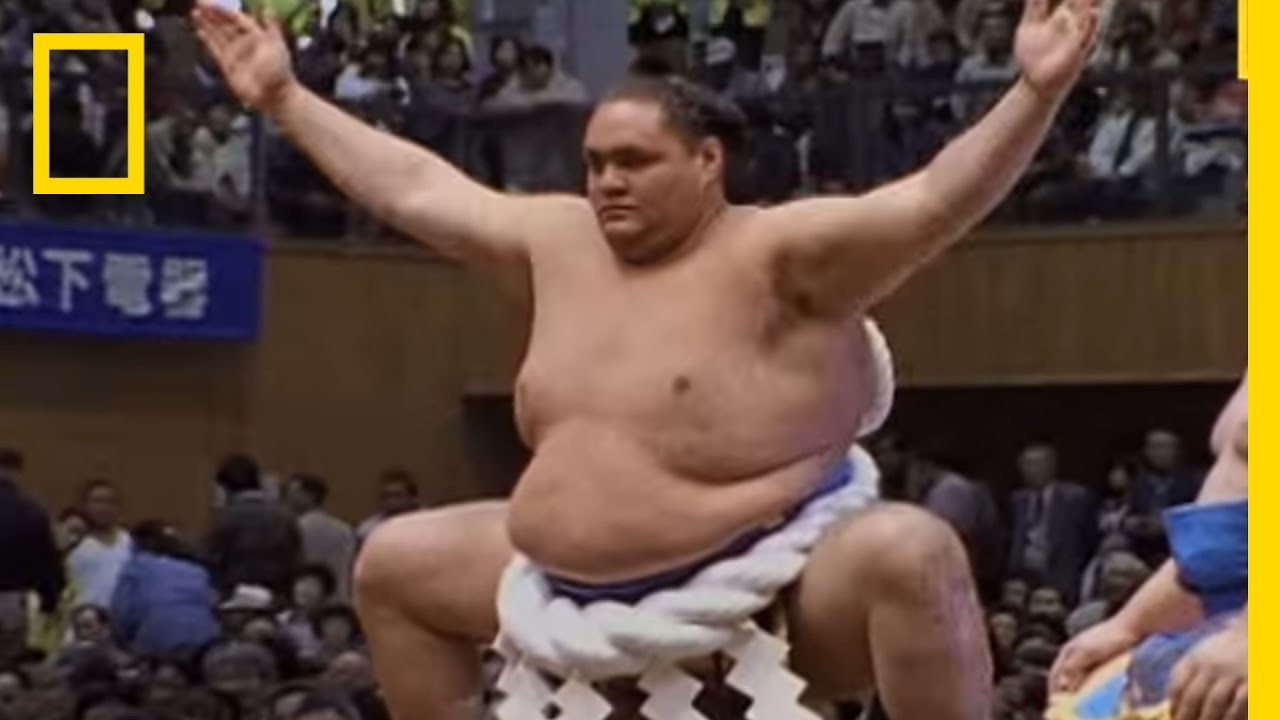 Image result for sumo wrestler