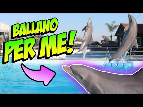 Due DELFINI si esibiscono per ME! Vlog a ZOOMARINE stupendo!