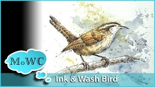 Painting a Wren in Watercolor Line and Wash