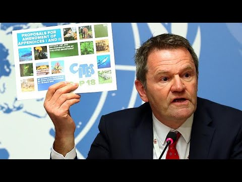 France 24:Wildlife trade: UN watchdog meets to protect more species