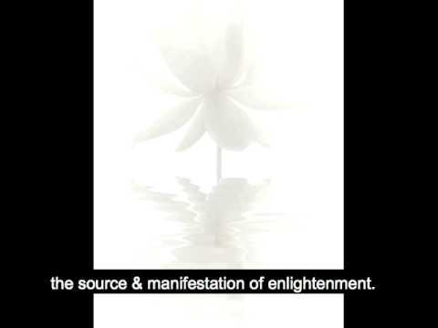 Violent Lotus