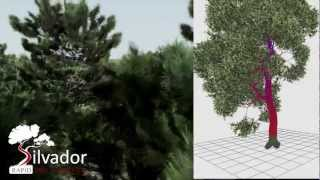 Silvador - A new rapid tree generator for game environments
