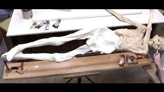 Ötzi Reborn: Discovering The Iceman