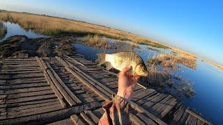 Рыбалка ПАУКОМ в СИБИРИ