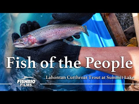 Fish of the People: Lahontan Cutthroat Trout at Summit Lake