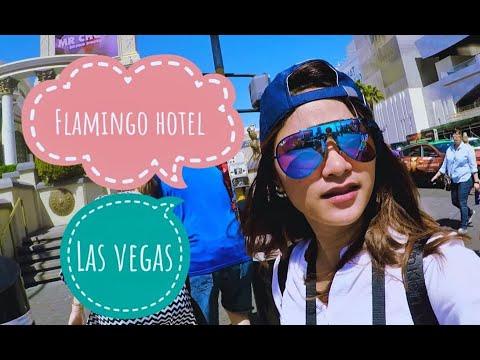 Flamingo •  Las Vegas, NV , United States