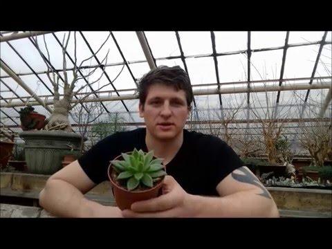 Реабилитация суккулентов или как ухаживать за растениями после покупки