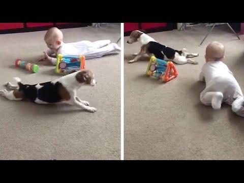 Adorable Dog Teaches Baby To Crawl