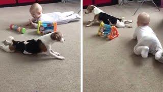 犬が…赤ちゃんにハイハイを教える(動画)