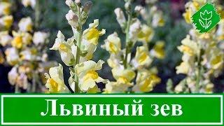 видео Расчет потребности растений в тепле
