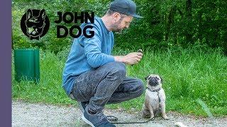 Jak oduczyć psa zjadania śmieci - CASE STUDY - John Dog