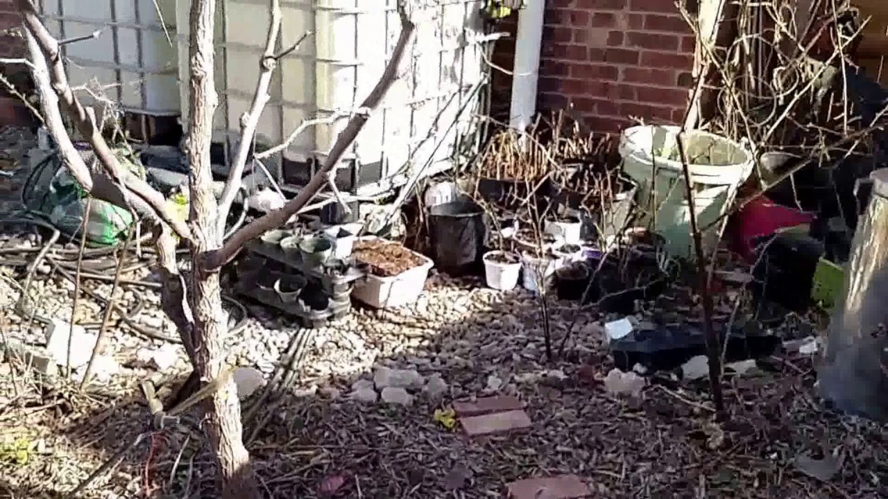 food forest backyard permaculture garden update 3 2 17 spring