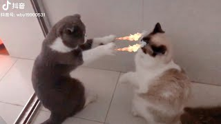Try Not To Laugh Challenge  Funny Cat & Dog Vines compilation