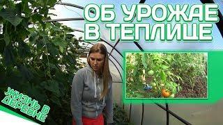 Репортаж из теплицы // Об урожае в теплице // Жизнь в деревне