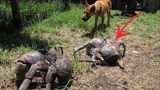 6 Animales Gigantes que No Creerás que Existen | TOP