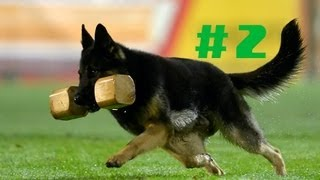 Ipobservations Episode 2 The German Shepherd Curriculum