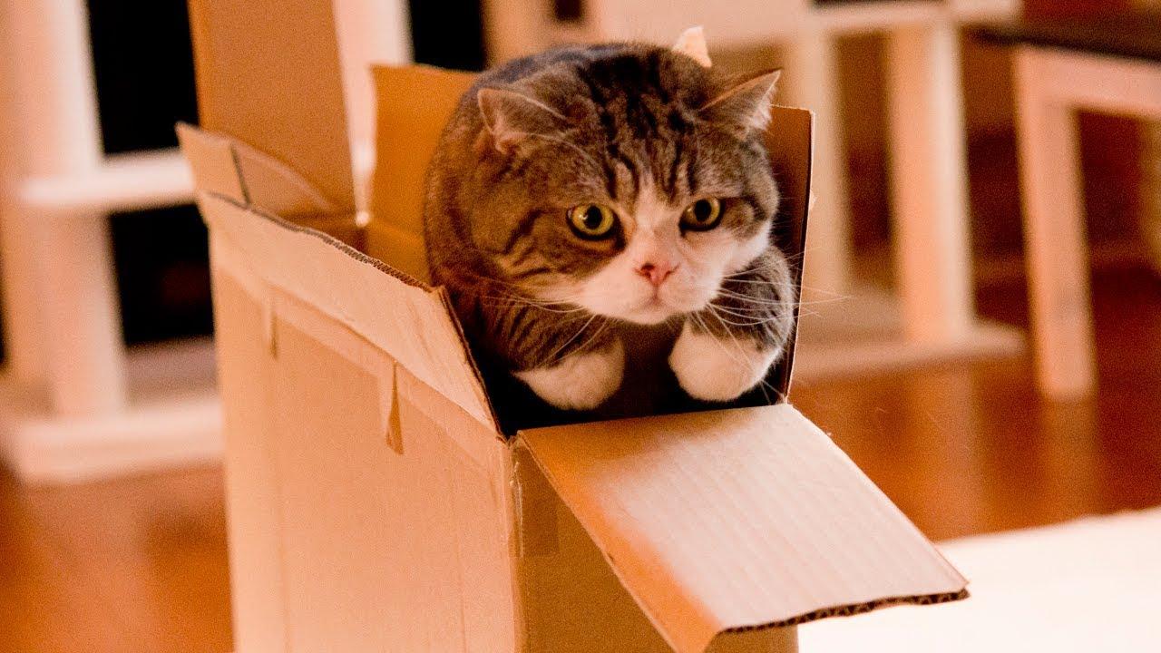 スリムな大きな箱とねこ-the-slim-large-box-and-maru