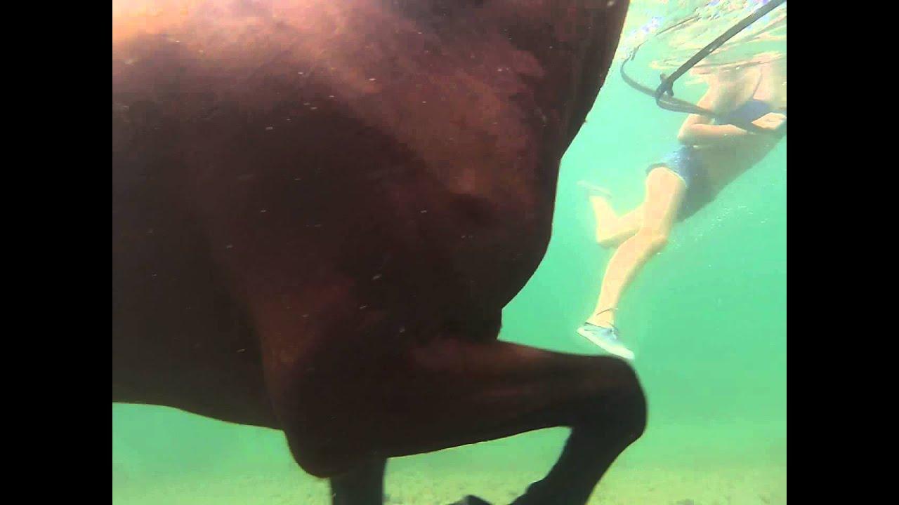 mon cheval paco et tosca nage vu sous l eau go pro youtube. Black Bedroom Furniture Sets. Home Design Ideas