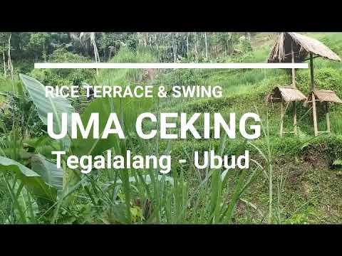 rice-terrace-and-swing-di-uma-ceking-resto-ubud---tempat-wisata-di-bali