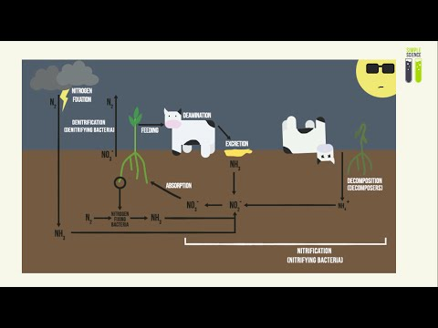 IGCSE Biology Revision - Part 13 - Nitrogen Cycle