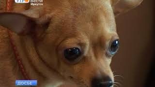 В День защиты животных в Иркутске можно бесплатно поставить своим питомцам прививки от бешенства