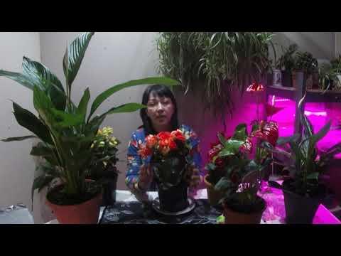 Вопрос: Какие цветы комнатные можно сажать в марте?