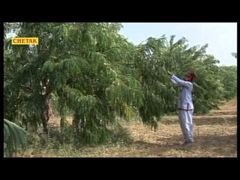 Raja Bhartari 3   Nathu Singh Sekhawat   Musical Rajasthani Katha1