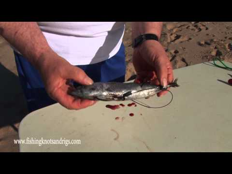 How To Bait For Thresher Shark With Geoff Wilson