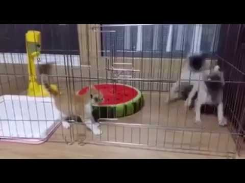 Funny Video - Cat and Dogs Fighting Moments 2017
