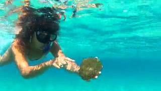 Playing With Fried Egg Jellyfish - Malta 2013