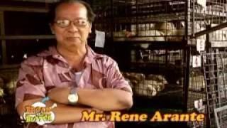 Pag-aalaga ng Manok