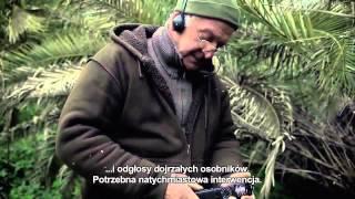 RZYMSKA AUREOLA - zwiastun pl, wkrótce w kinach