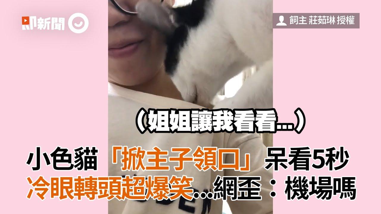小色貓「掀主子領口」呆看5秒 冷眼轉頭超爆笑...網歪:機場嗎│寵物│貓咪