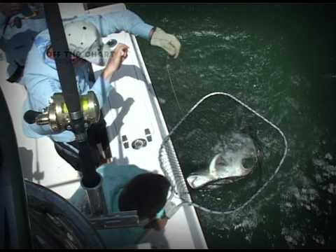 Jack: Spin Fishing: Angola