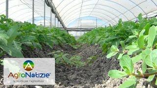 Biostimolanti, il punto di vista dell'agronomo