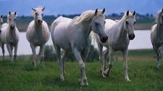 ✿♪♫ Belinda Carlisle -✿♪♫ Runaway Horses ✿♪♫