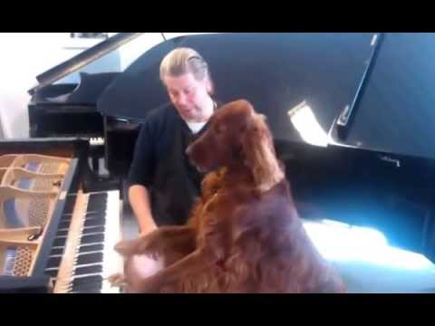 Elmo, singing Irish setter testing a grand piano after service