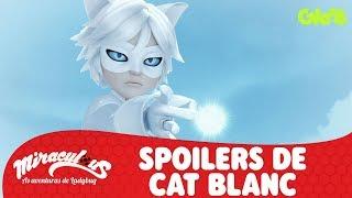 SPOILERS DE CAT BLANC   MIRACULOUS   LADYBUG   Mundo Gloob