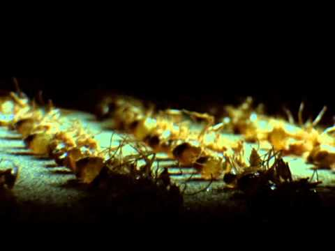 Phase IV - Ant funeral