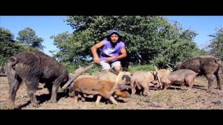 Chicha con Harina - Los Chanchos Kochi Kochi (Video Oficial) - (Wetruwe Mapuche)