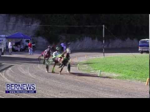 Driving Horse & Pony Club Racing, Nov 11 2013
