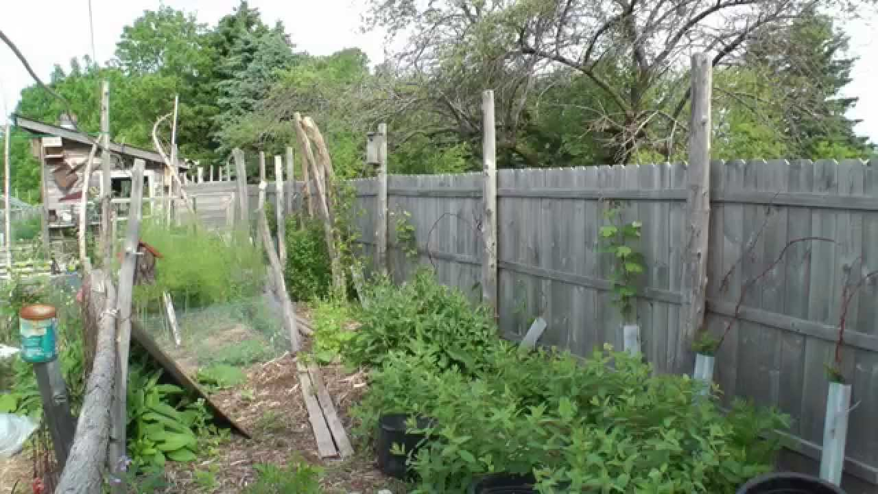 Backyard Permaculture tour my dazzling permaculture backyard! - youtube