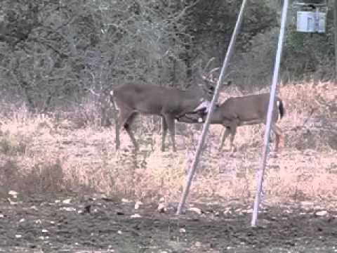 Hondeaux Oaks whitetail hunt kevin Tauzin