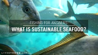 Fishing For Answers: What Is Sustainable Seafood?