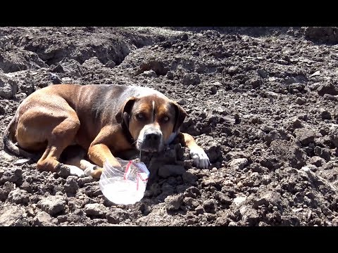 Hope For Paws: Abandoned dog in a construction site wouldn't move because he was so scared.
