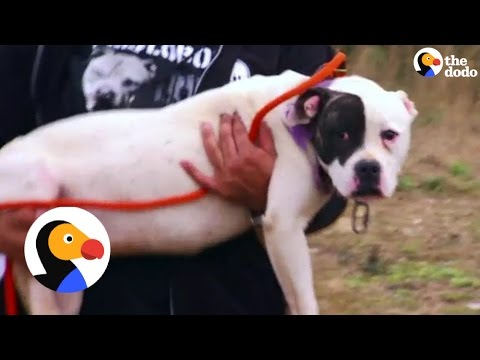 Dogs Left Tied Up Just Wanted To Give Kisses | The Dodo